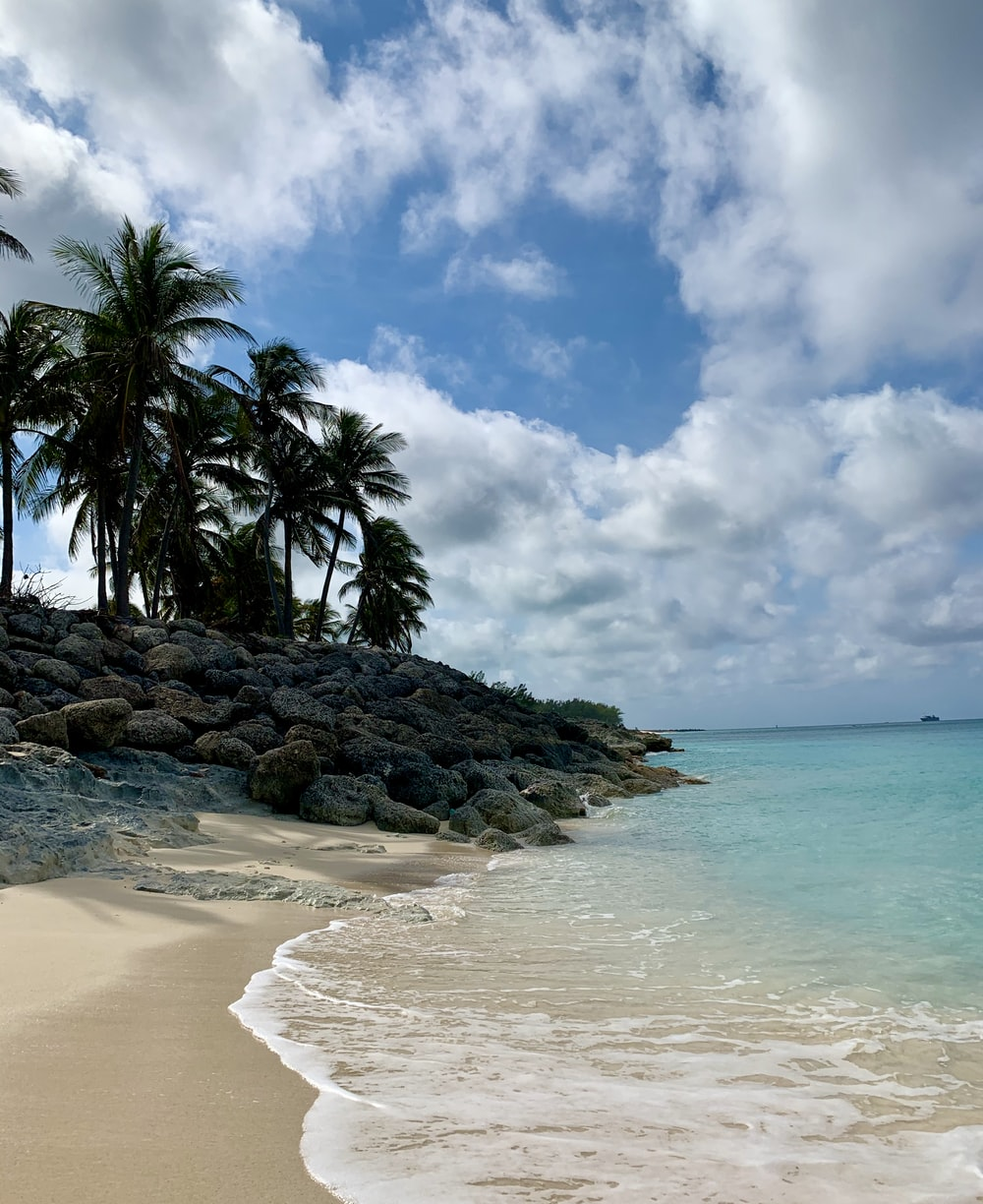 green palm trees on brown sand beach during daytime