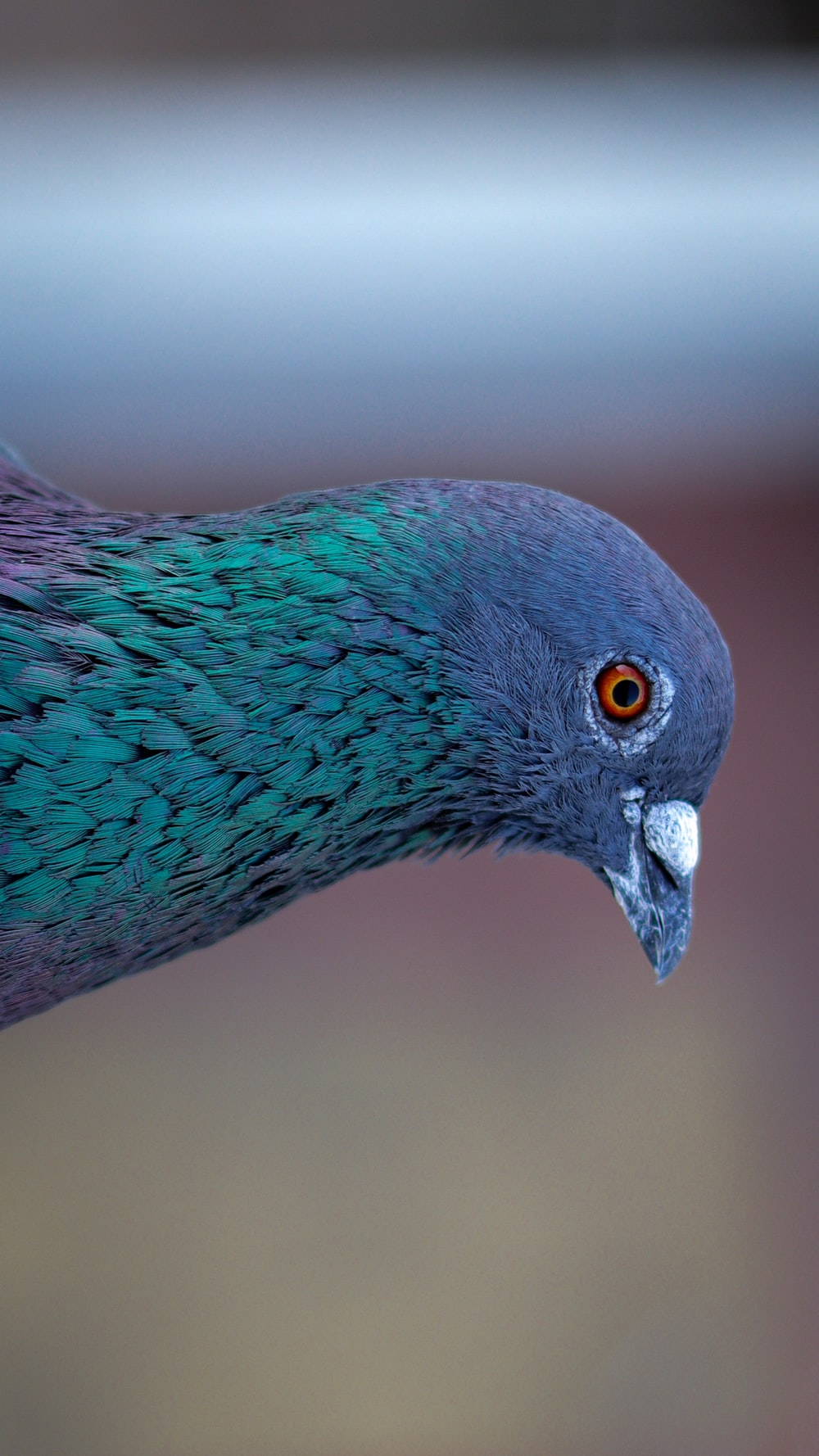blue and gray bird in close up photography
