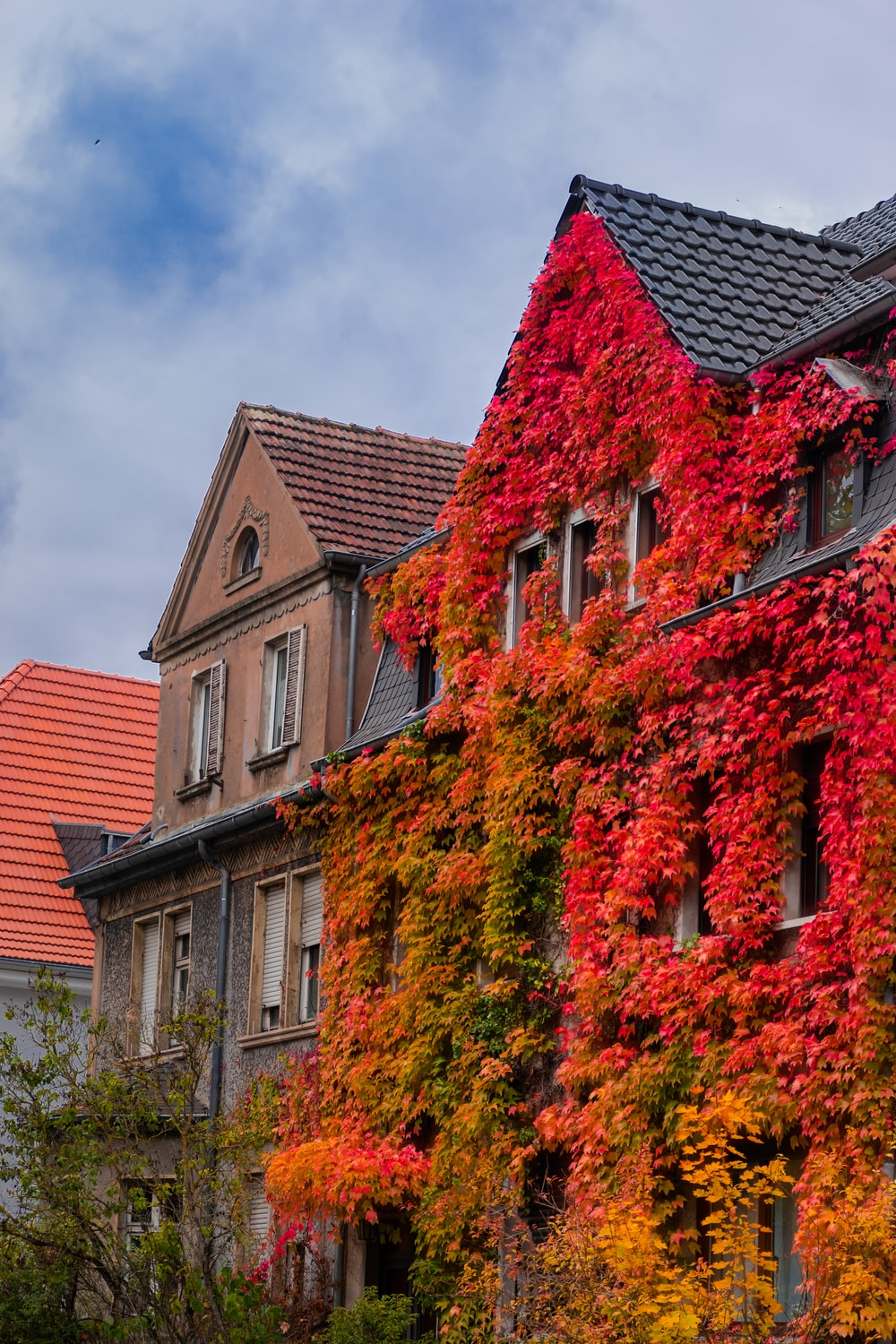 brown brick building with green and orange plants
