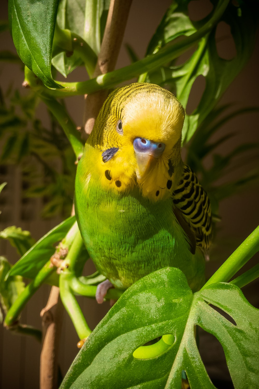yellow and black bird on green plant