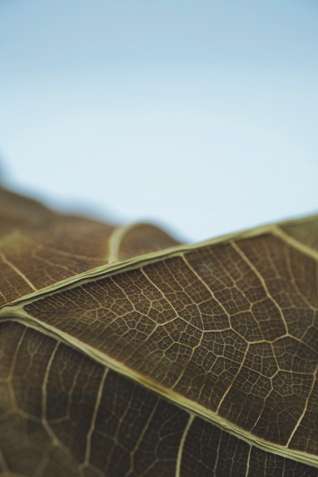 Energian Saasto—These Sencha Fiddle Treegrid