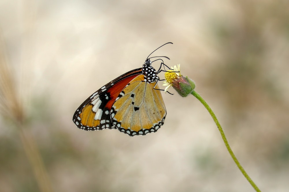 orange black and white butterfly perched on green plant