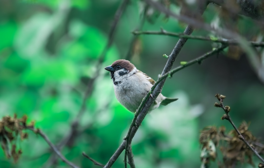 white and brown bird on tree branch
