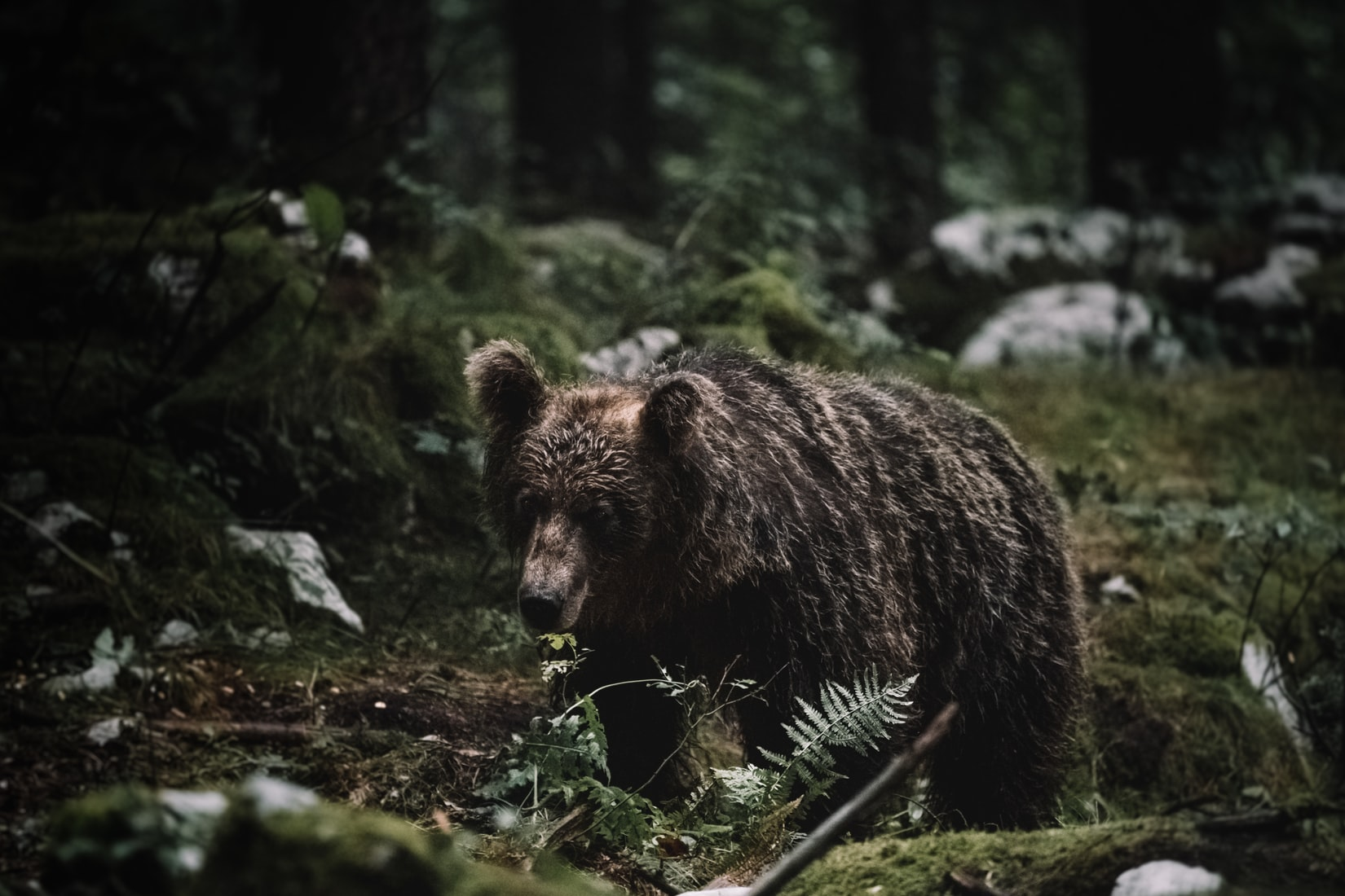 "Redefining ""Recovery"" of Grizzly Bears"