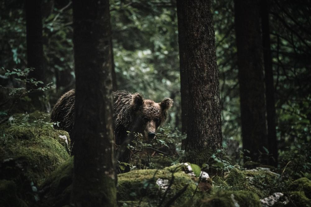 brown bear on tree branch during daytime