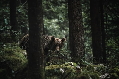 brown bear on tree branch during daytime bears zoom background