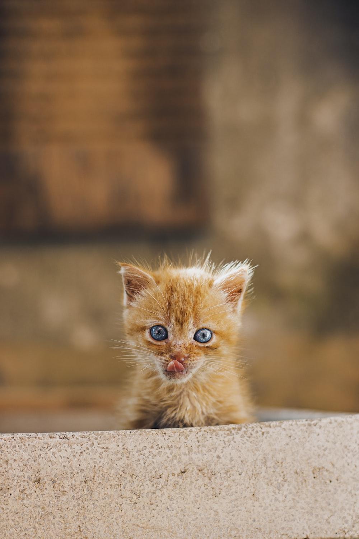 orange tabby kitten on gray concrete floor