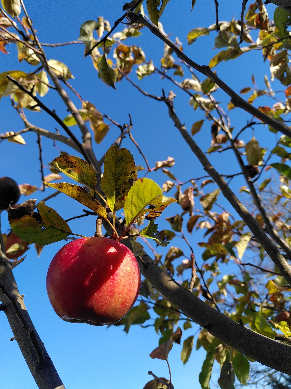 red apple on tree branch during daytime