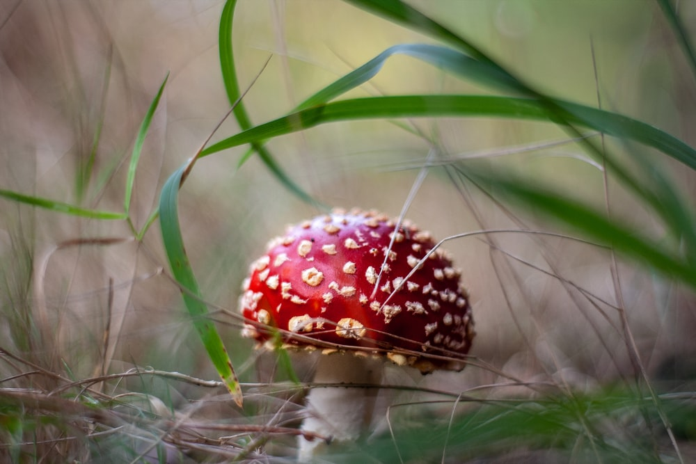 red and white strawberry on green grass