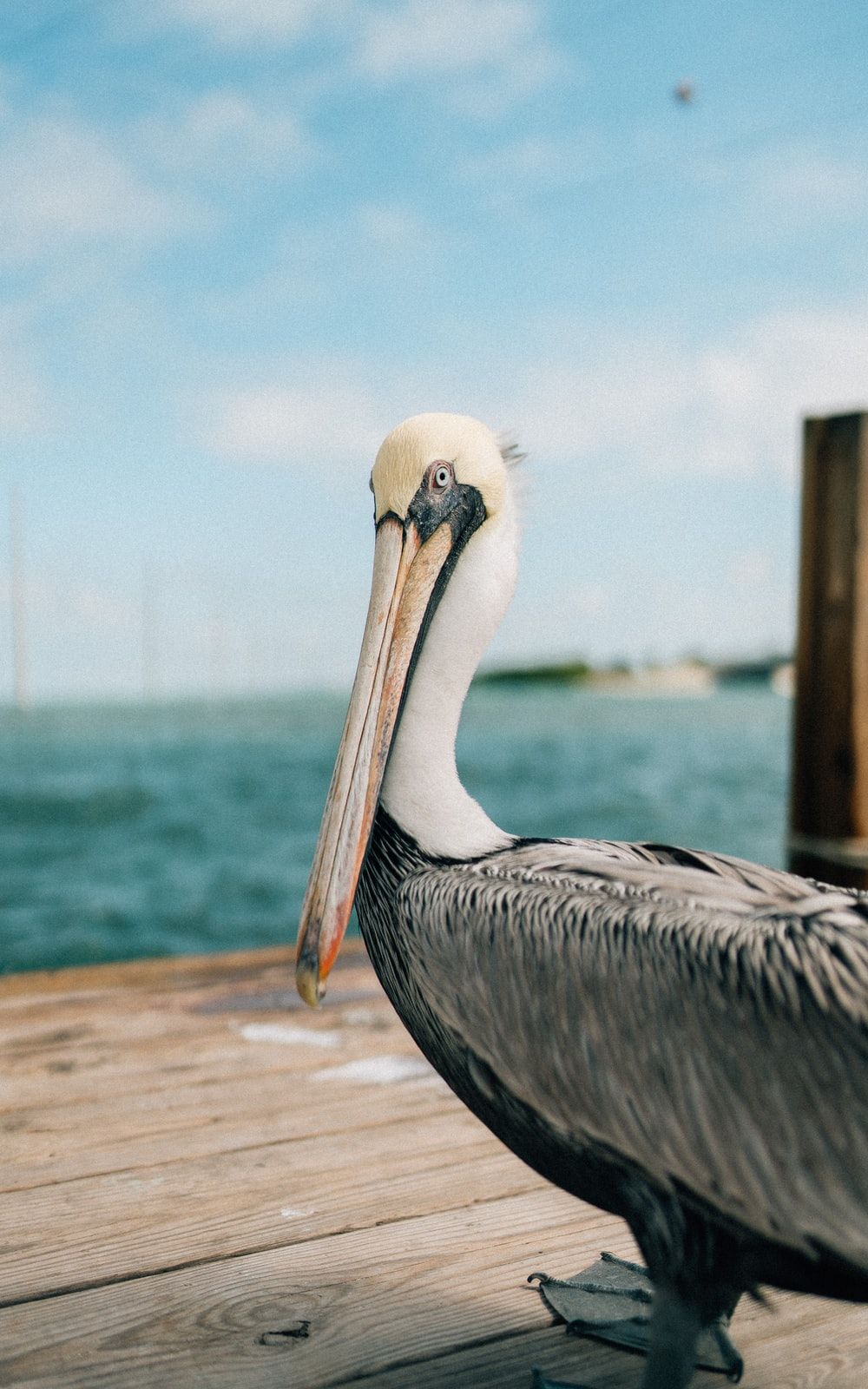 pelican on brown wooden dock during daytime