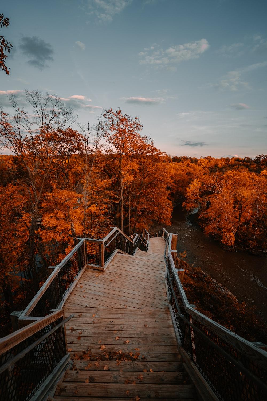 brown wooden bridge between brown trees during daytime