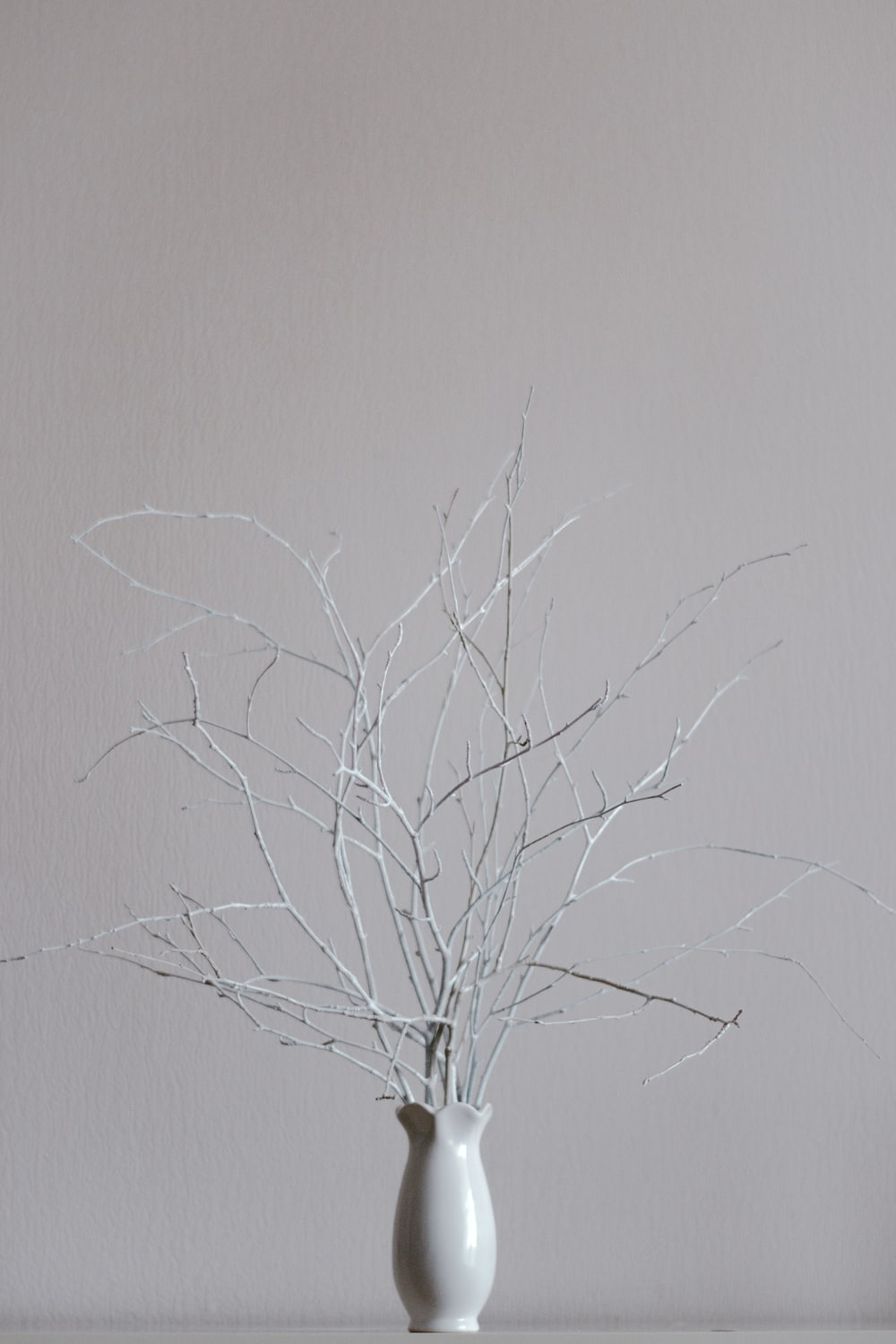 leafless tree on white wall