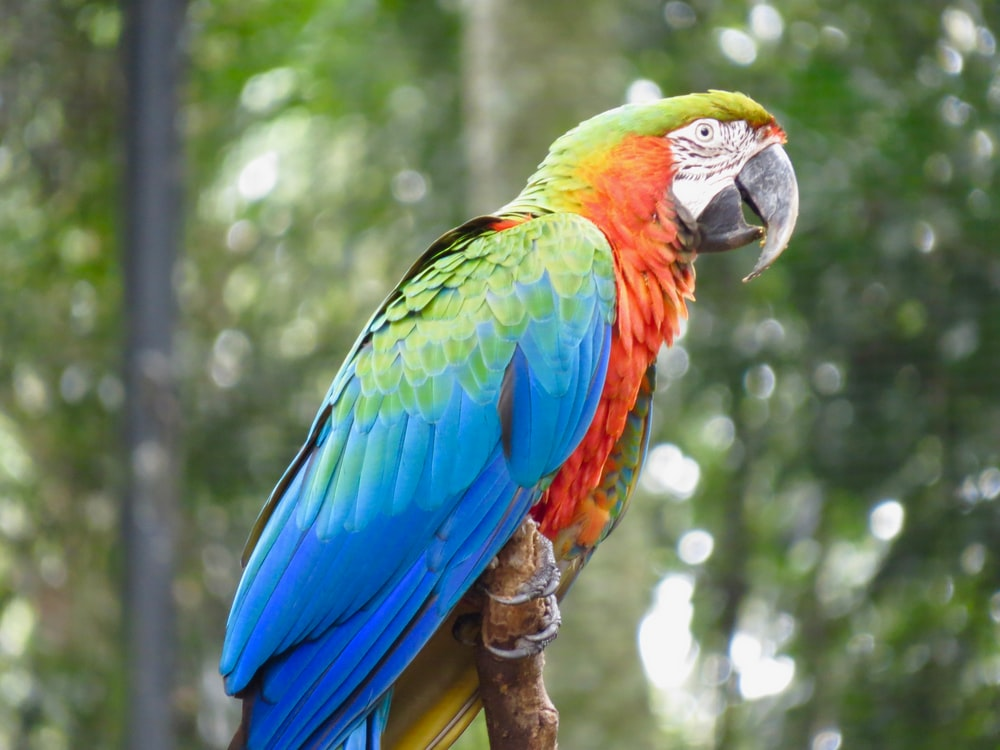blue red and green parrot on brown tree branch