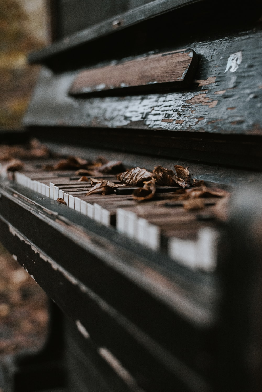brown wooden plank with brown dried leaves