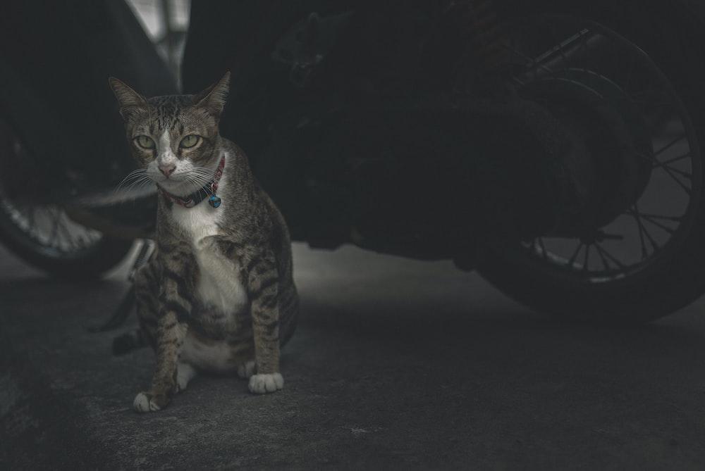 brown tabby cat on black floor