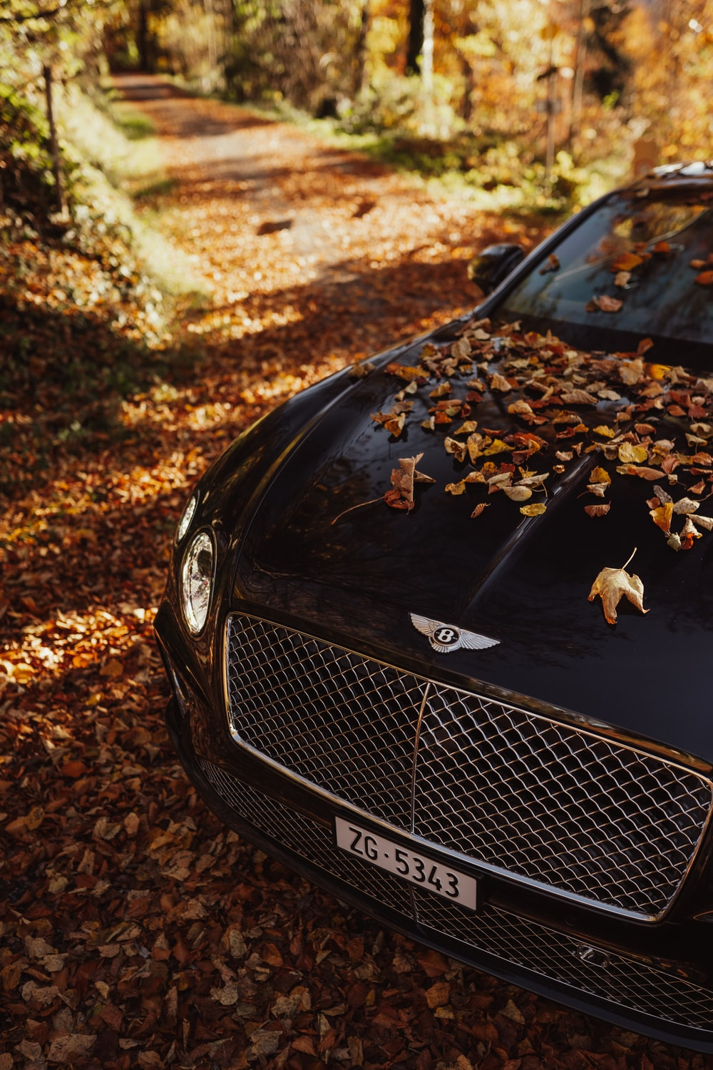 black bmw car with dried leaves on ground