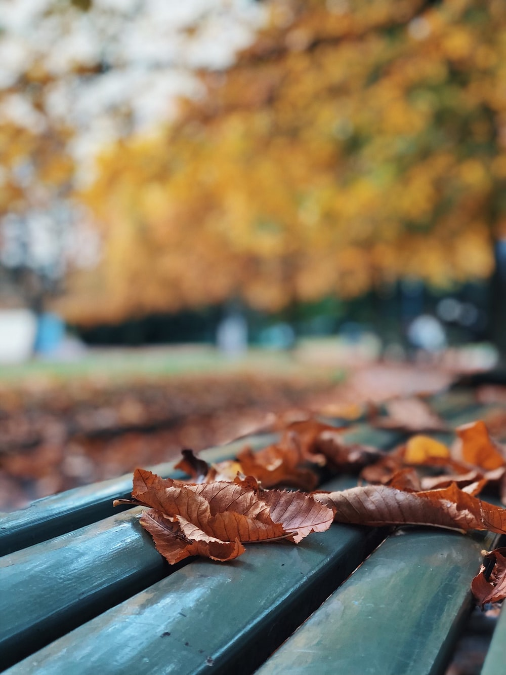 brown dried leaves on green wooden fence