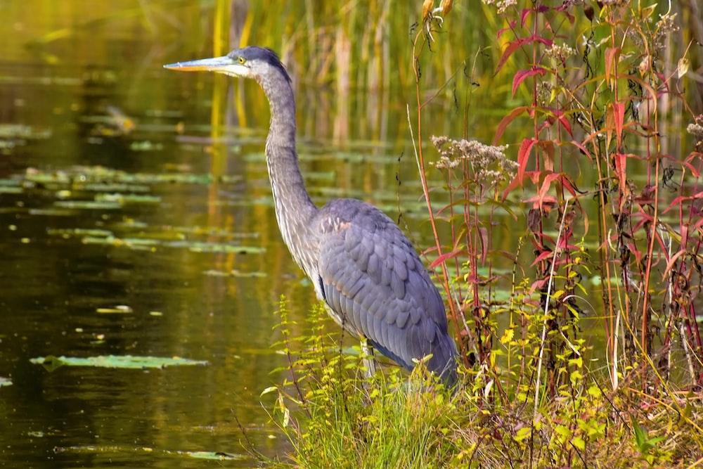 grey heron on water during daytime