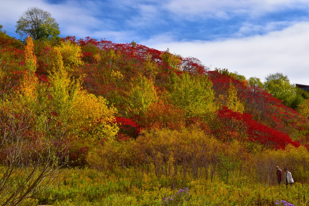 red and yellow trees under blue sky during daytime