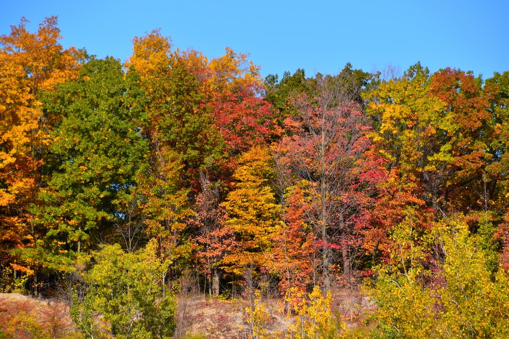 green and red trees under blue sky during daytime