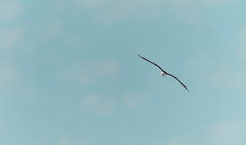 bird flying under blue sky during daytime