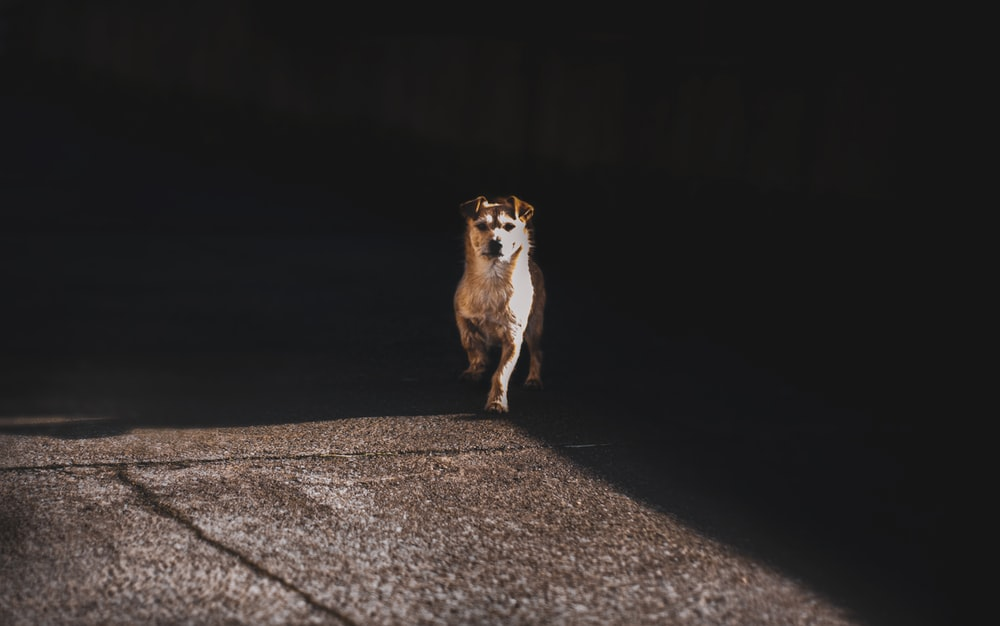 brown and white short coated dog on gray concrete road