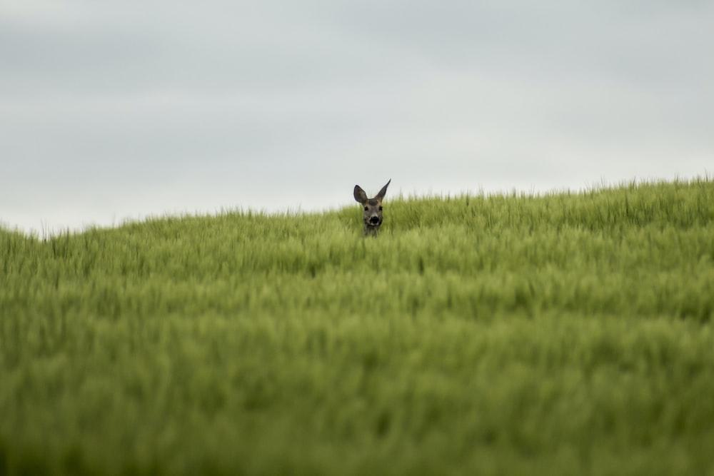 black rabbit on green grass field under white sky during daytime