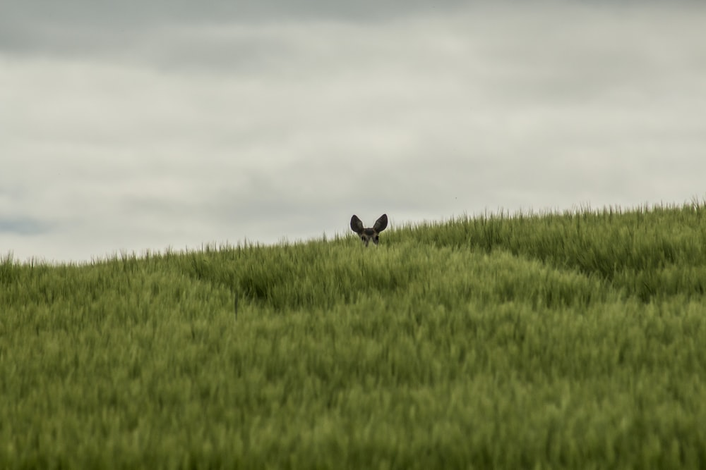 black rabbit on green grass field during daytime