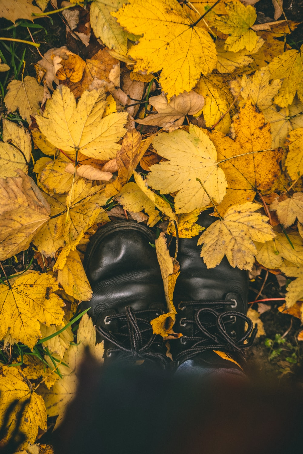 black leather boots on yellow maple leaves