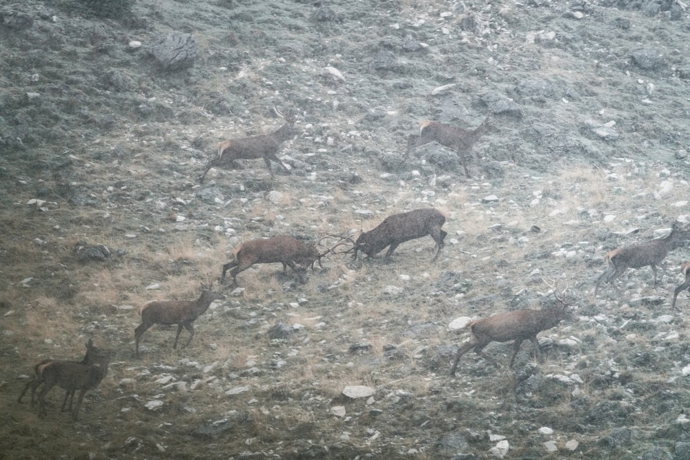 brown goats on gray ground during daytime