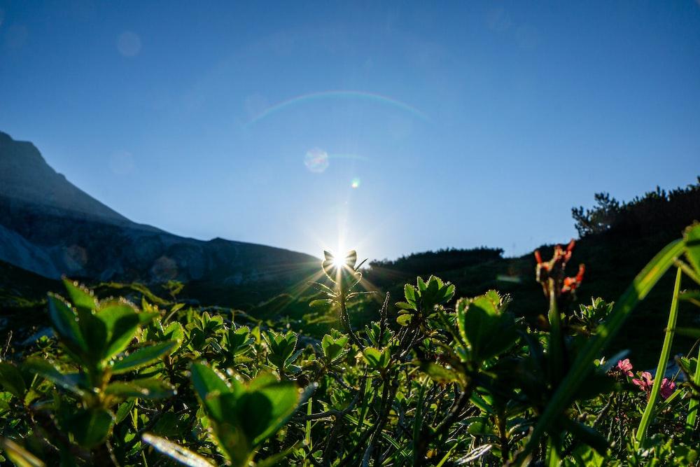green plants under blue sky during daytime