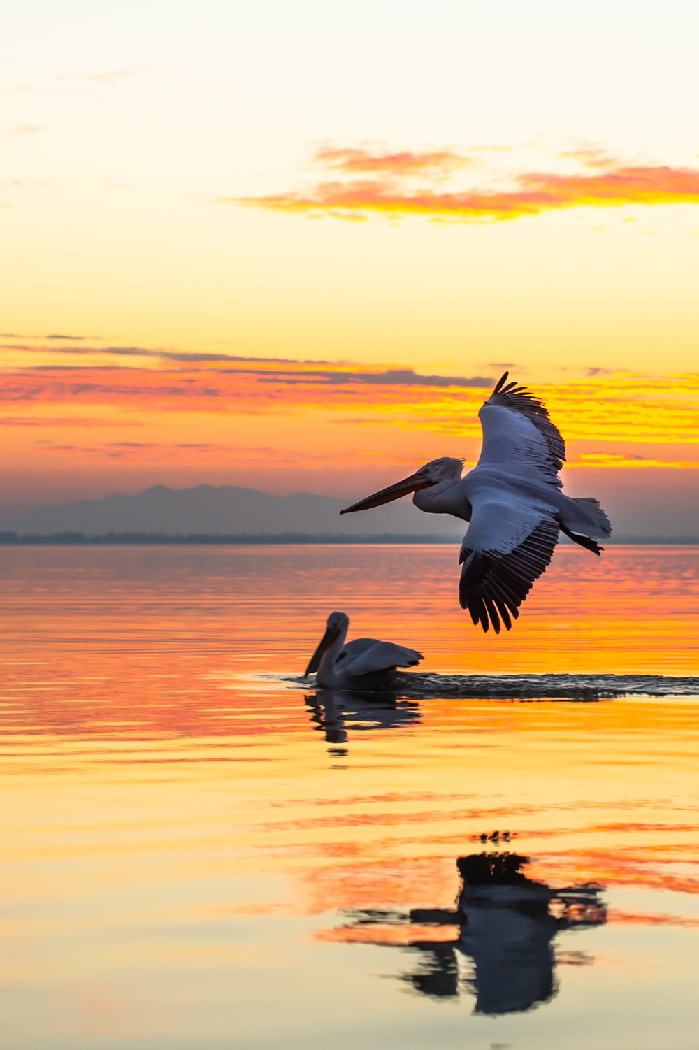 pelican flying over the sea during sunset