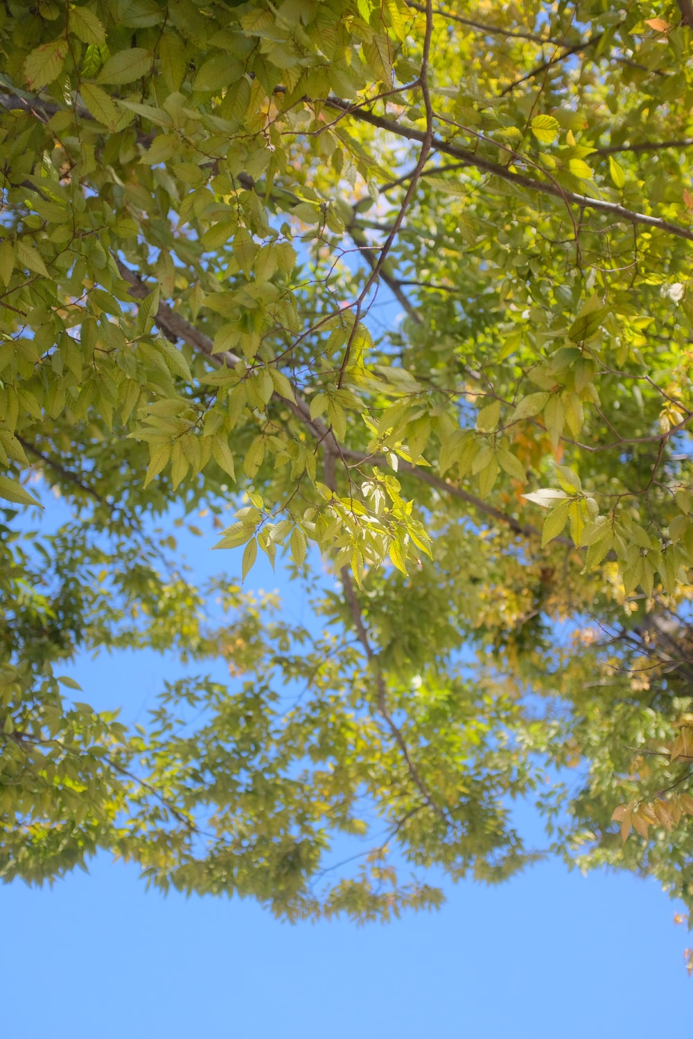 green leaves on tree during daytime