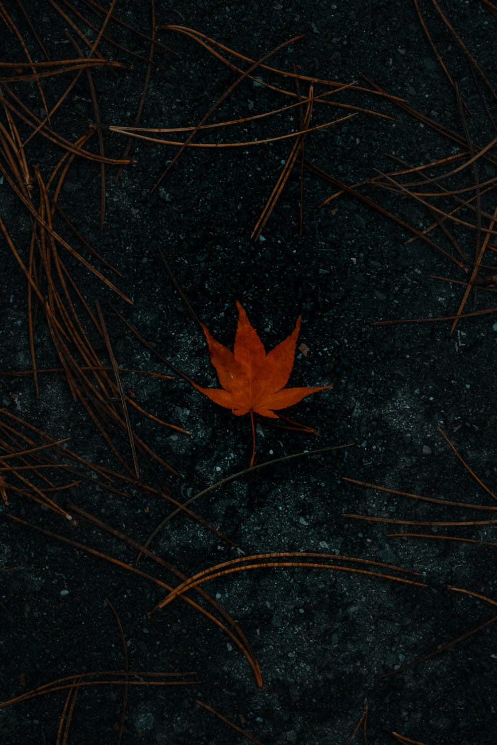 red maple leaf on brown grass