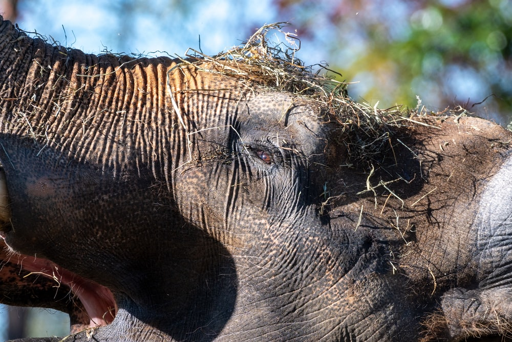brown elephant with baby elephant