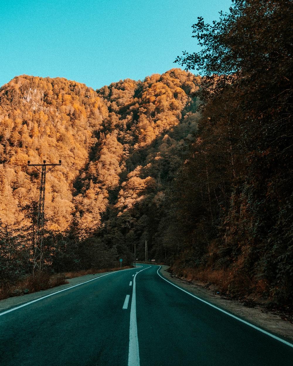 gray asphalt road between brown trees under blue sky during daytime
