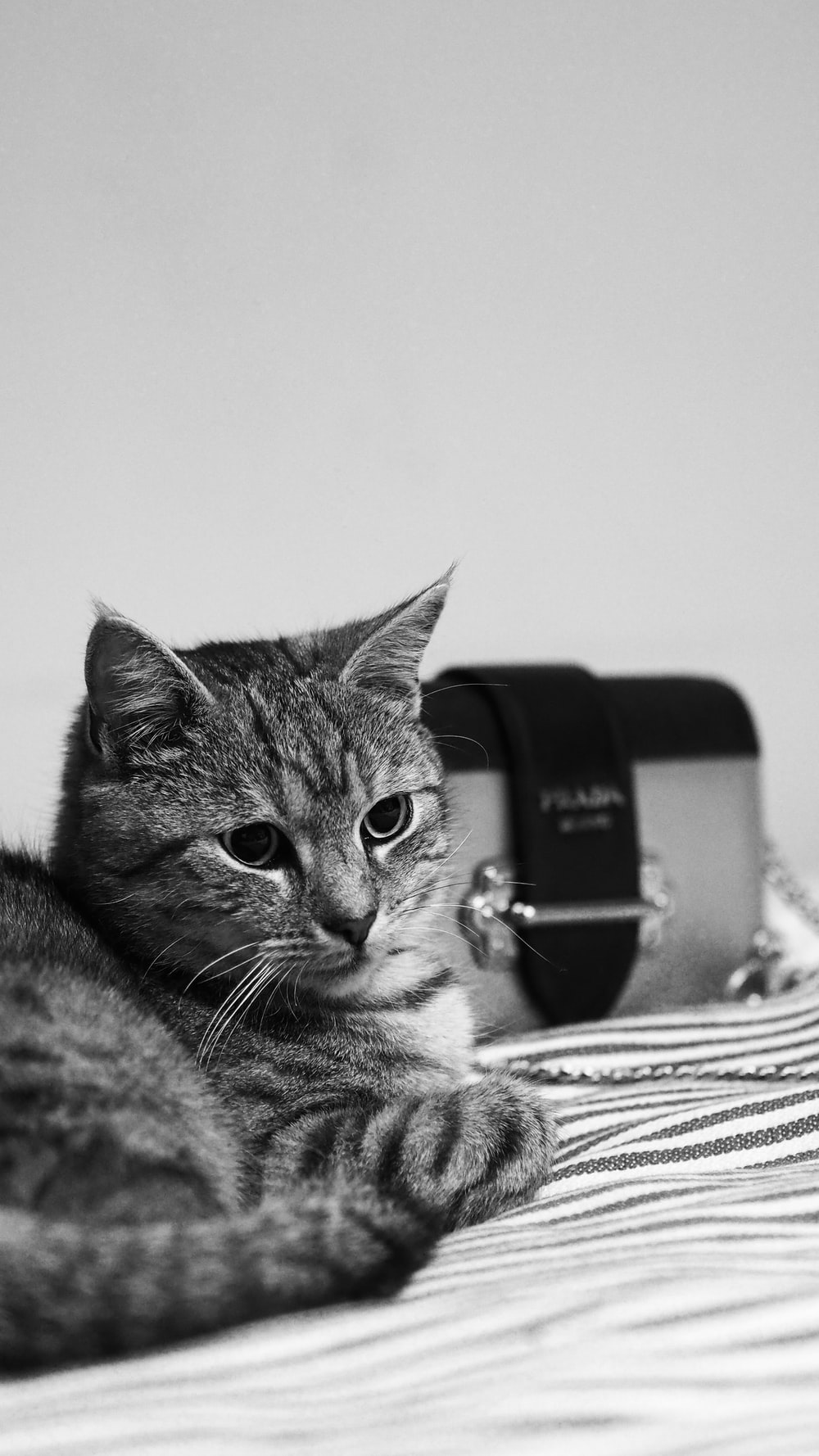 silver tabby cat lying on white and black textile