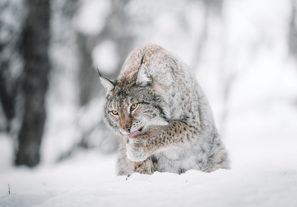 brown and black cat on snow covered ground