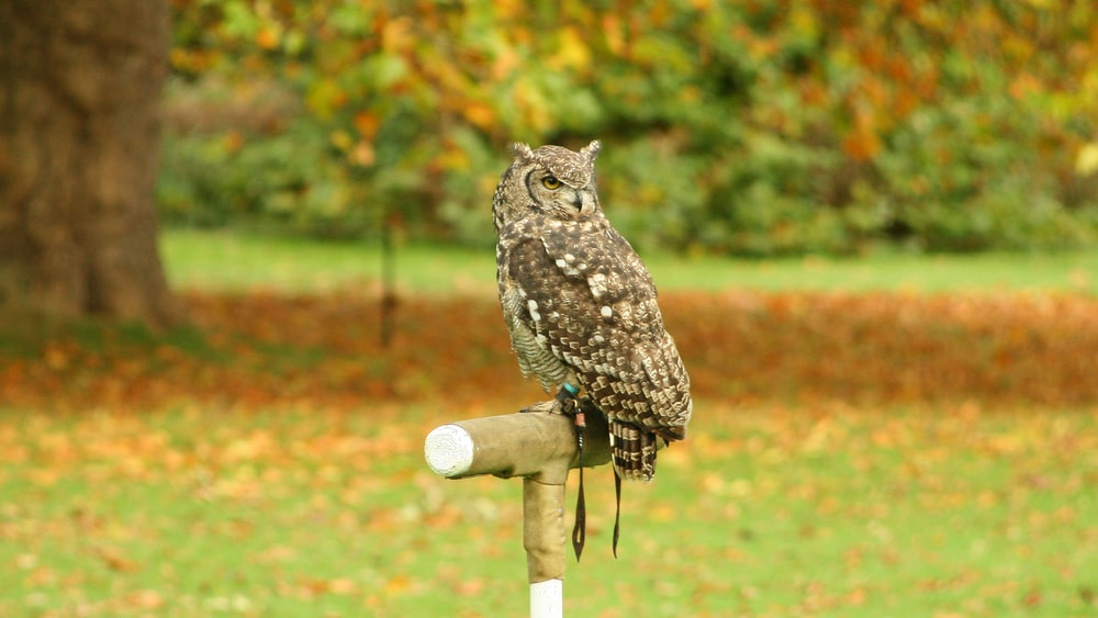 brown and white owl on brown wooden stick during daytime