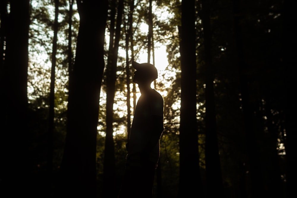 silhouette of man standing in the middle of the forest during daytime