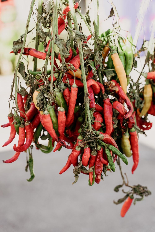 red chili peppers in tilt shift lens