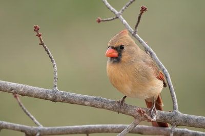 brown and gray bird on tree branch good luck teams background
