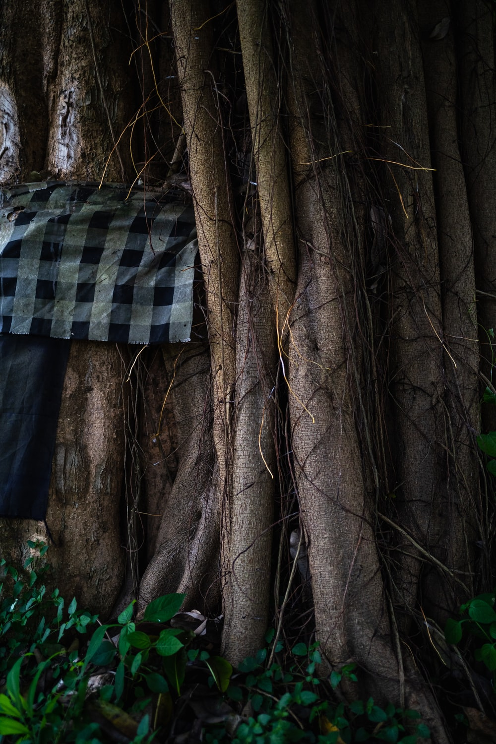 black and white checkered textile on brown tree