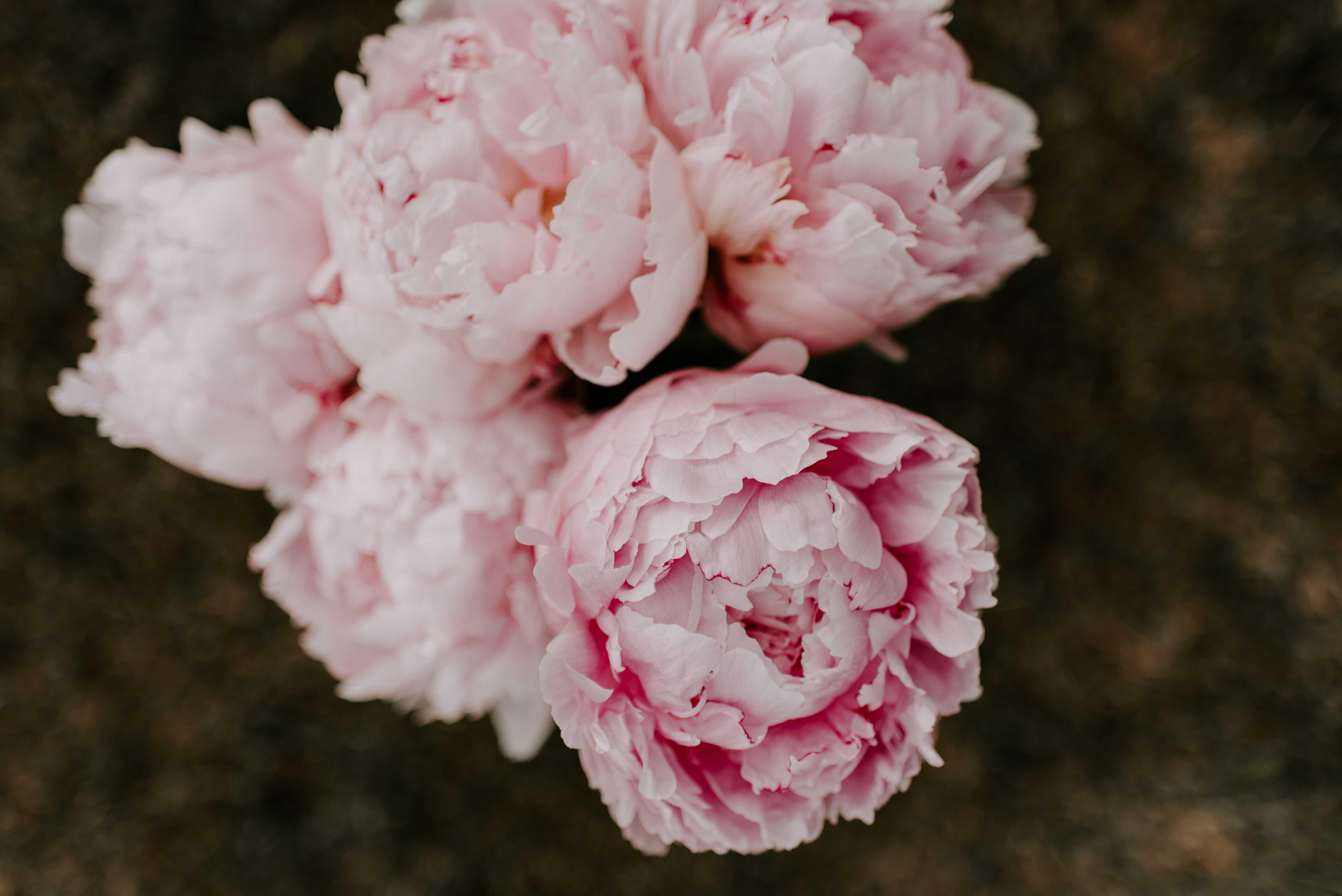 Pink peony flower bouquet
