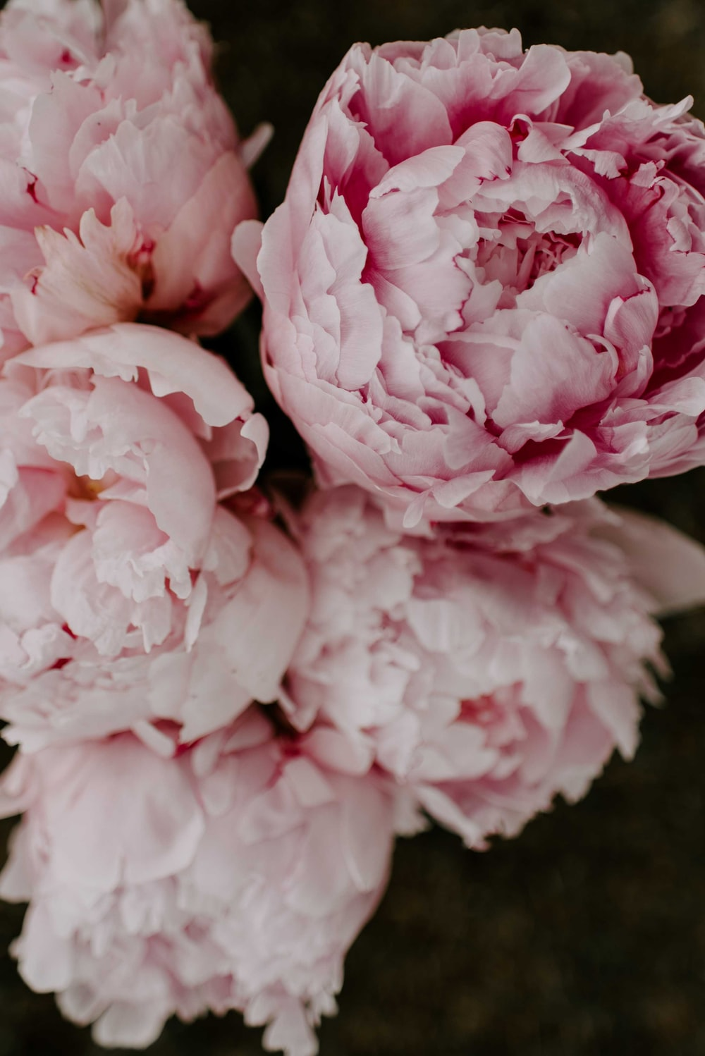 pink and white flowers in macro lens
