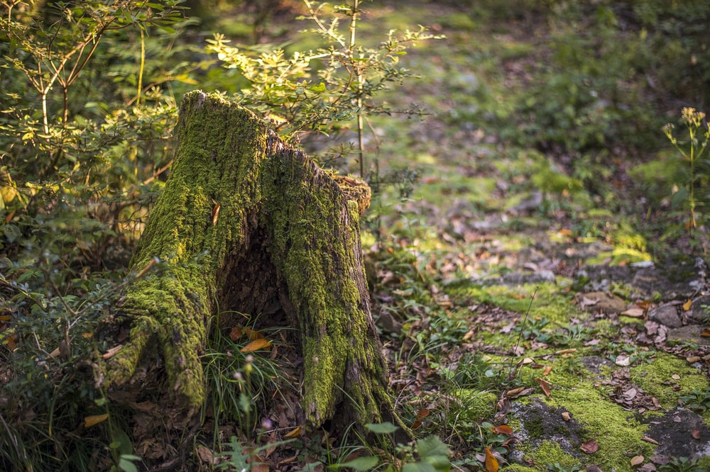 brown tree trunk surrounded by green leaves