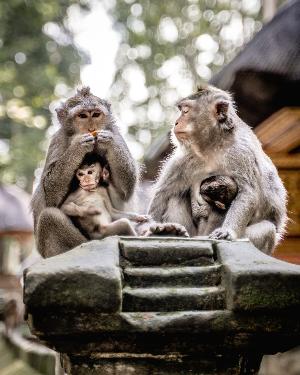two monkeys sitting on gray concrete bench during daytime
