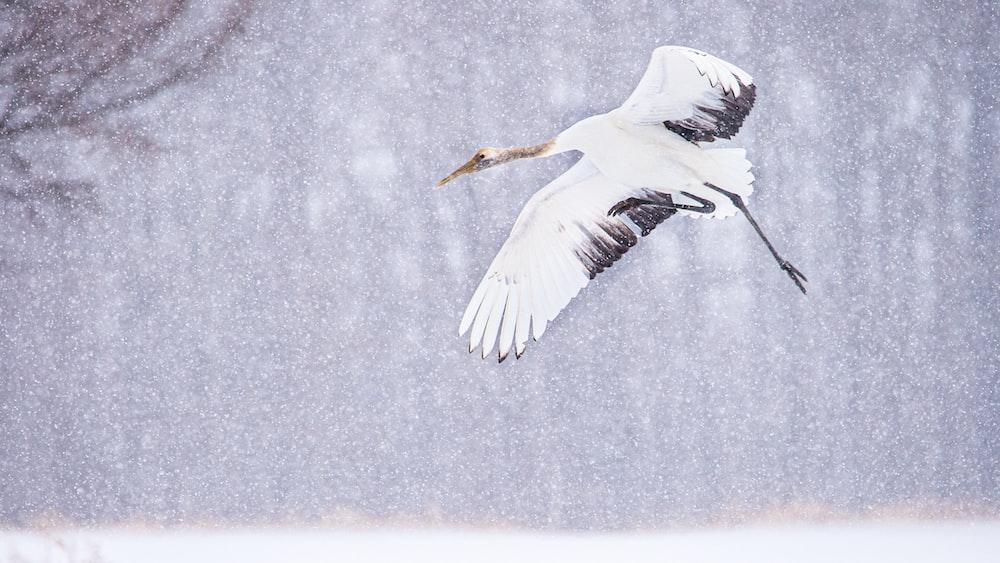 white bird flying over snow covered ground
