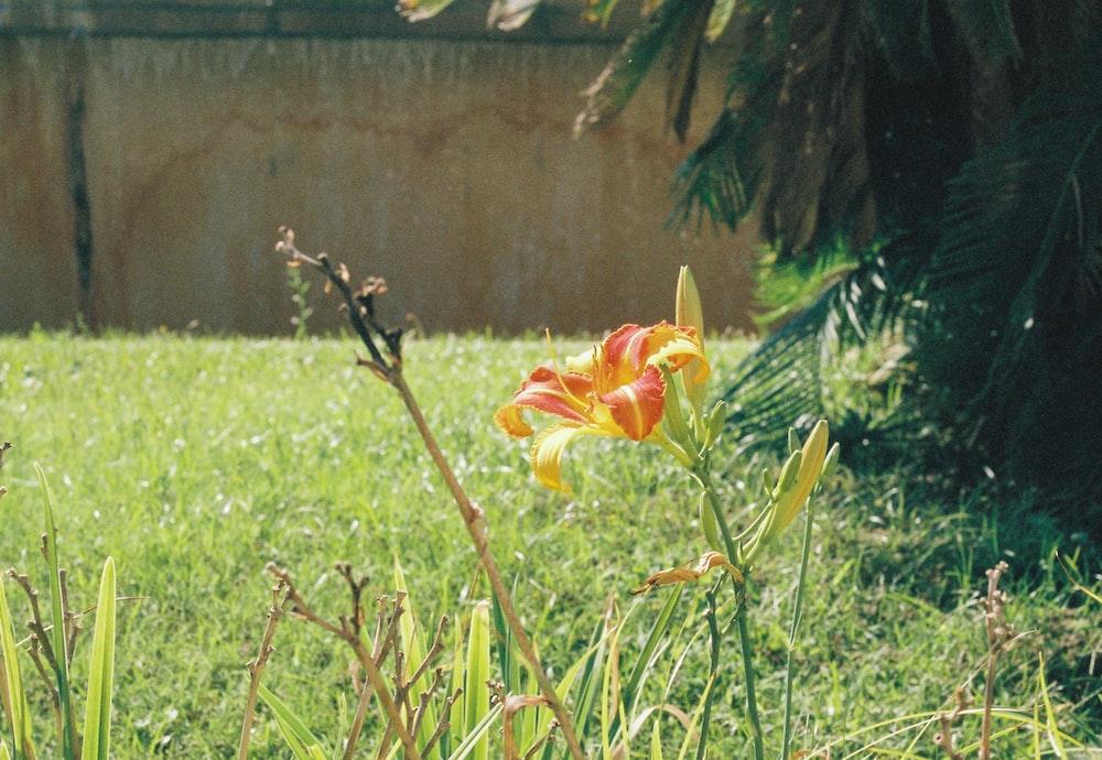 red flower on green grass field