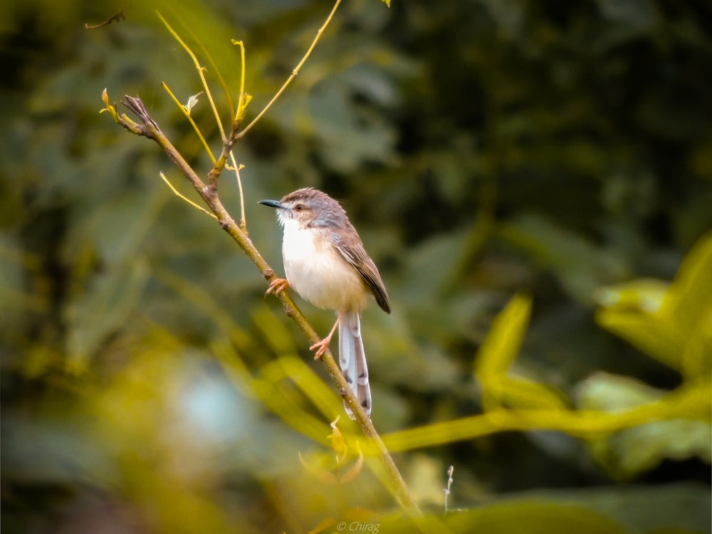 brown and white bird on green plant stem